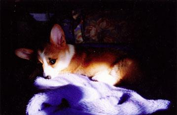 子犬光と影
