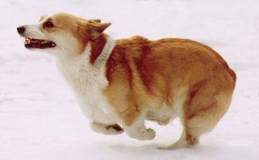 レイ雪の中を走る